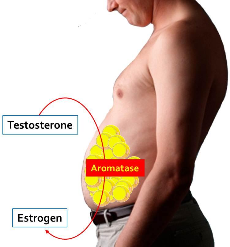 ot-seksa-testosteron-podimaetsya